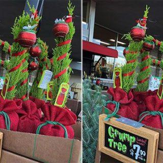 trader-joes-christmas-trees