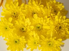 bouquet of vibrant yellow flowers